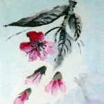 Cherry Blossoms (Water Color)